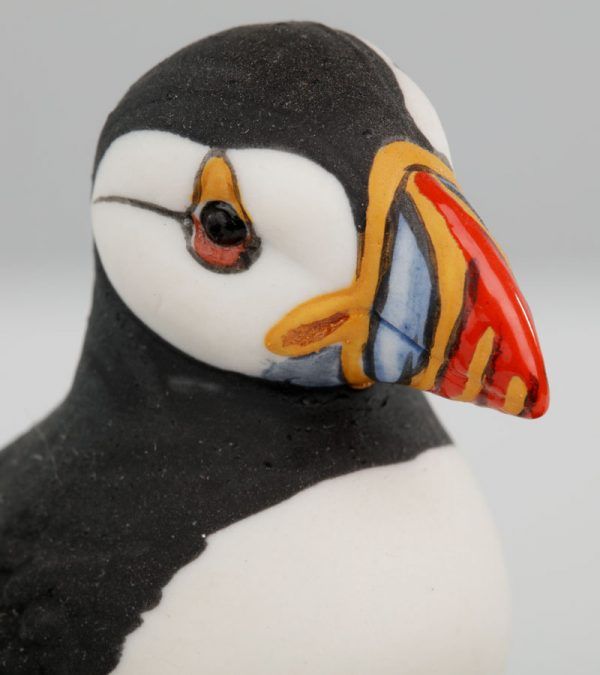 ACS Puffins grey background close up