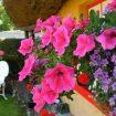 adare-cottage-shop-cottage-photo-7-M